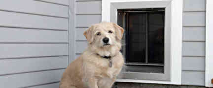 Tips and Tricks for installing Pet Doors