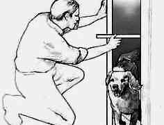 How to get the Right size pet door